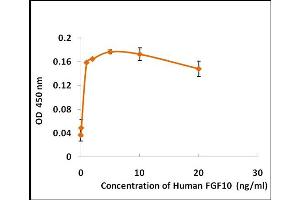 Image no. 2 for Fibroblast Growth Factor 10 (FGF10) (Active) protein (ABIN5509306)