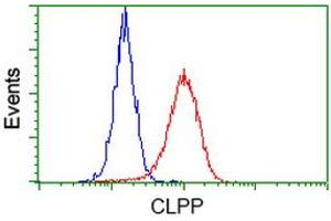 Image no. 4 for anti-ClpP Caseinolytic Peptidase, ATP-Dependent, Proteolytic Subunit Homolog (E. Coli) (CLPP) antibody (ABIN1497536)