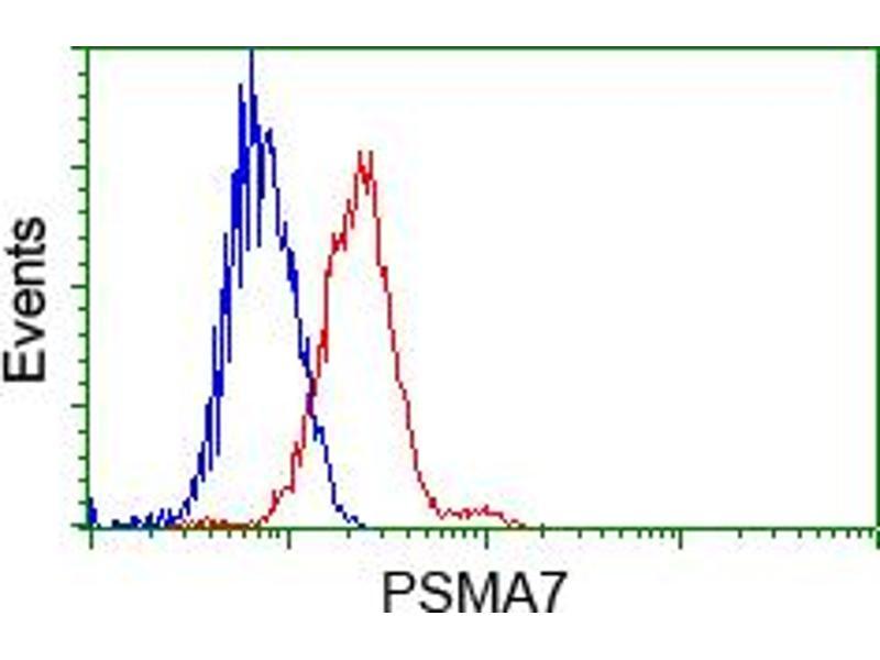 image for anti-Proteasome (Prosome, Macropain) Subunit, alpha Type, 7 (PSMA7) antibody (ABIN1498762)