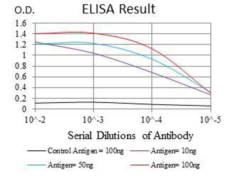 ELISA image for anti-V-Raf-1 Murine Leukemia Viral Oncogene Homolog 1 (RAF1) antibody (ABIN969559)