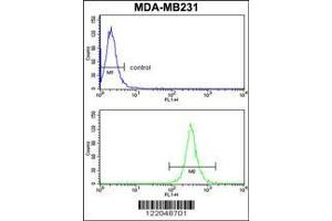 Image no. 3 for anti-rho GTPase Activating Protein 18 (ARHGAP18) (AA 180-207) antibody (ABIN652455)
