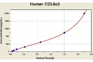 Image no. 1 for Collagen, Type VI, alpha 3 (COL6a3) ELISA Kit (ABIN1114267)