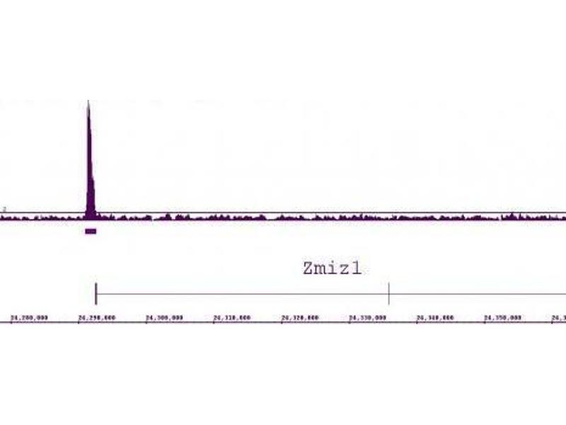 Image no. 1 for anti-Nuclear Receptor Subfamily 1, Group H, Member 3 (NR1H3) (N-Term) antibody (ABIN2668708)