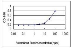 Image no. 4 for anti-Barrier To Autointegration Factor 1 (BANF1) (AA 1-90) antibody (ABIN614684)
