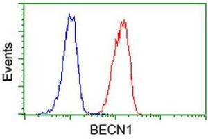 Image no. 6 for anti-Beclin 1, Autophagy Related (BECN1) antibody (ABIN1496868)