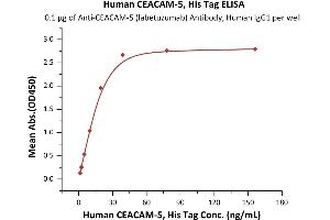 Image no. 1 for Carcinoembryonic Antigen-Related Cell Adhesion Molecule 5 (CEACAM5) (AA 35-685) protein (His tag,AVI tag,Biotin) (ABIN6386445)