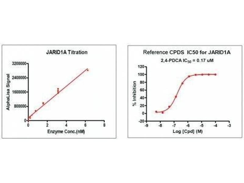 Screening Assay (ScA) image for Lysine (K)-Specific Demethylase 5A (KDM5A) protein (DYKDDDDK Tag) (ABIN2669680)