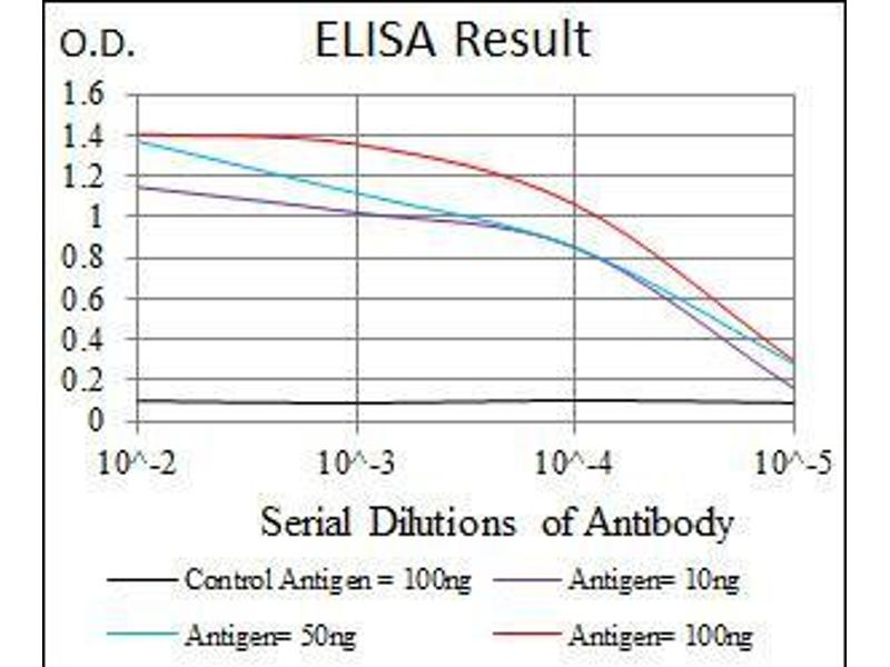 ELISA image for anti-Thrombopoietin antibody (THPO) (ABIN969571)
