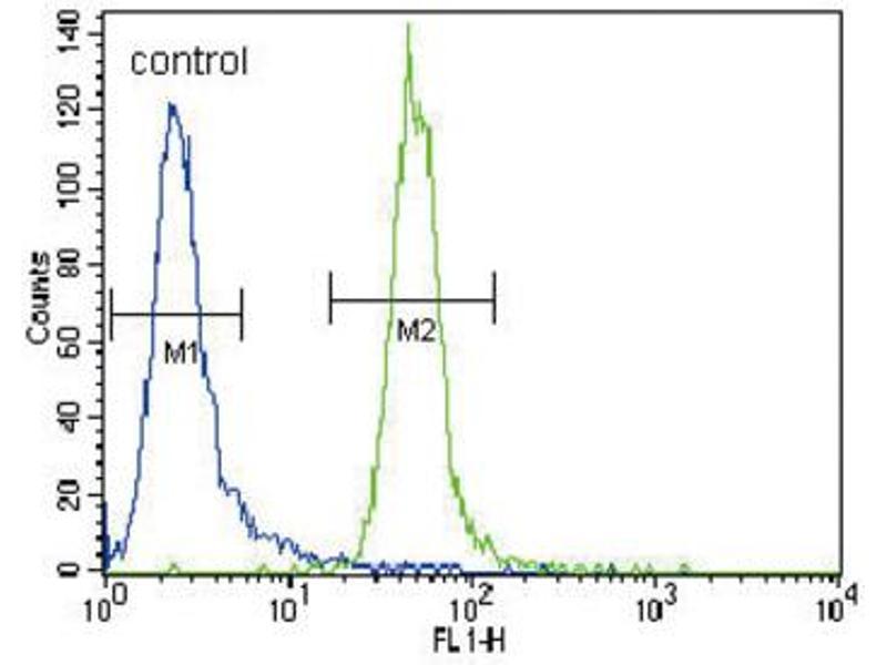 Image no. 1 for anti-Myeloid/lymphoid Or Mixed-Lineage Leukemia (Trithorax Homolog, Drosophila) (MLL) antibody (ABIN2996098)