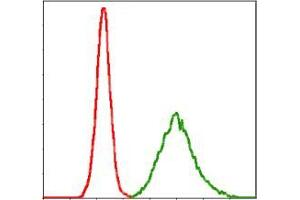 Image no. 2 for anti-Potassium Voltage-Gated Channel, KQT-Like Subfamily, Member 1 (KCNQ1) antibody (ABIN969227)