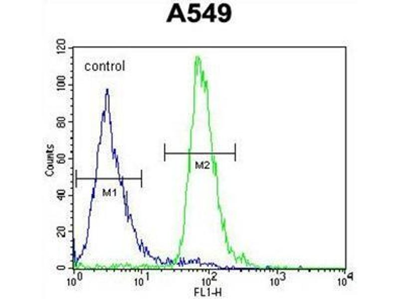 Flow Cytometry (FACS) image for anti-Arachidonate 12-Lipoxygenase, 12R Type (ALOX12B) (AA 629-660), (C-Term) antibody (ABIN950354)