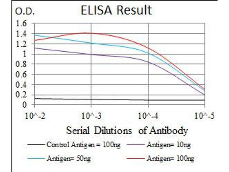 Image no. 6 for anti-Eukaryotic Translation Initiation Factor 4B (EIF4B) antibody (ABIN1497978)